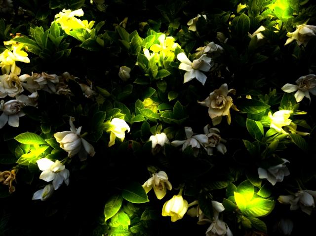 ホタルの幼虫,ホタルの幼虫の名前,ホタルの幼虫の呼び名,ホタルの生態,ホタルが光る理由,ホタルの幼虫は光る